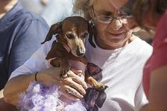 Roxie gets ready for her debut as a ballerina in the Oktoberfest Dachshund Costume Contest Saturday in Jefferson City's Old Munichburg neighborhood.