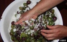 葡萄酒怎麼釀家庭自釀葡萄酒的方法 Sprouts, Meat, Chicken, Vegetables, Food, Essen, Vegetable Recipes, Meals, Yemek