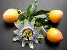 """Taste the Tropics with Passion Fruit,"" via McDonald Garden Center -- Click through for information and growing advice"