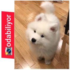 😍 #blue 🐶 🥰 🐶 🐕 🐩 🐱 🐃 🦁 🐯 🐽 🐥 🐧 🦌 🦋 🦂 🐜 🐈 🐕 🐩 🐱 🐃 🦁 🐯 🐽 🐥 🐧 🦌 🦋 🦂 🐜 😍🐈🐱🐈😍 🐶 🐕 🐩 🐱 🐃 🦁 🐯 🐽 🐥 🐧 🦌 #terrier #dog #köpeksevgisi #dogs #tedavi… Husky, Dogs, Animals, Instagram, Animales, Animaux, Animal Memes, Husky Dog, Animal
