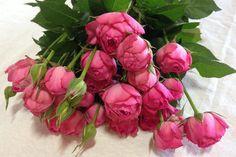Fuchsia Lace Garden Spray Rose