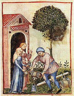 from theTacuinum Sanitatis of Paris,  late 14th century: XXV. Olive Oil (Oleum Oliue).  The Tacuinum Sanitatis were illuminated medical manuals based on texts translated from Arabic into Latin.