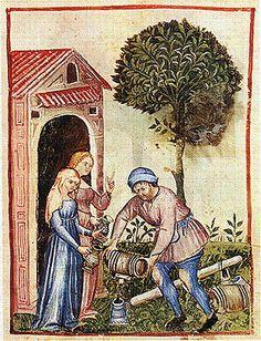 from theTacuinum Sanitatis of Paris, late 14th century: XXV. Olive Oil (Oleum Oliue). The Tacuinum Sanitatis were illuminated medical manuals based on texts translated from Arabic into Latin.