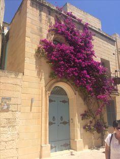 Po polsku bugenwilla to kącicierń. Tu - w Mdinie. Places To Visit, Plants, Archipelago, Malta, Vacation, Travel, Plant, Planets