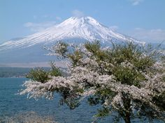 Japan   Mount Fuji Cherry Japan photos, wallpapers