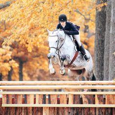 autum jumping horse