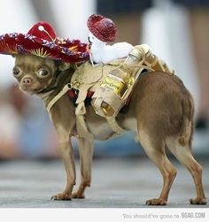 If I could only catch the little dog down the street, I'd make him wear this. The tiny tequila is a nice touch...hehe