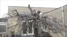 Hoe kijk je een kat uit de boom? Kat, Cattery, Snow, Outdoor, Outdoors, Outdoor Games, The Great Outdoors, Eyes, Let It Snow
