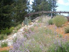 Residential Rainwater Harvesting System and Landscape Design, Los Gatos, CA