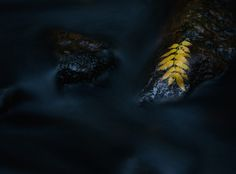 Autumn by Linus Englund on 500px.  www.facebook.com/englundphoto