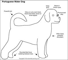 Portuguese Water Dog Types Of Coats, Portuguese Water Dog, Kids Study, Dog Activities, Working Dogs, Pet Grooming, Dog Care, Mammals, Dog Breeds