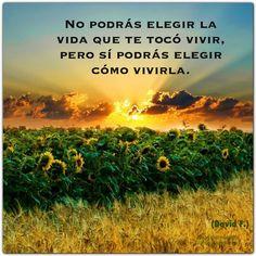 """""""No podrás elegir la vida que te tocó vivir, pero sí podrás elegir cómo vivirla"""". (David F.) http://alejandrodavidfo.blogspot.com"""