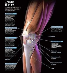 Knee pain and it causes (spanish) Medicine Notes, Medicine Student, Sports Medicine, Human Body Anatomy, Human Anatomy And Physiology, Muscle Anatomy, Cupping Therapy, Massage Therapy, Back Weight Exercises