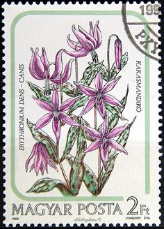 Hungary.  INDIGENOUS LILIES.  ERYTHRONIUM DENS-CANIS.  Scott 2956 A790, Issued 1985 Oct 28, Phot & Engr., Perf. 12 x 11 1/2, 2ft. /ldb.