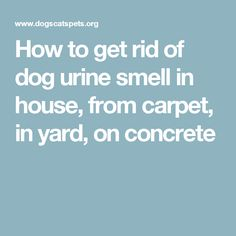 how to clean dog pee off concrete