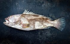A handy, alphabetized guide with photos of the most common fish and other seafood items found on Greek menus with their English, Greek and scientific names. Mullet Fish, Red Mullet, Atlantic Cod, Greek Fish, Greek Menu, Yellowfin Tuna, Fish Soup, Fish Farming, Habitats