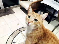 Billy Cat | Pawshake