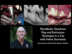 Mandibular Quadrant Extraction in a Cat with Feline Stomatitis - YouTube