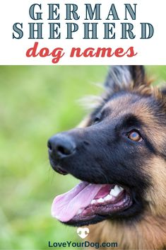 Looking for the perfect German Shepherd Dog Names? This list of over 200 different names will help inspire the perfect moniker for your pup! #LoveYourDog #DogNames #BestDogNames #FemaleDogNames #MaleDogNames #GermanShepherdDogNames #BestGirlDogNames #BestBoyDogNames Best Girl Dog Names, Boy Dog Names, Female Dog Names, Dog Information, R Dogs, German Shepherd Dogs, Fun Activities, Your Dog, Pup