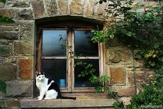 cats-in-windows-06