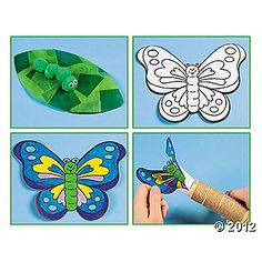Butterly Life Cycle
