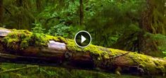 They Set Up A Camera In The Forest And Captured The Most Incredible Scene Ever  Sponsored links - When I first saw this video I thought it was some kind of CGI or stop motion animation, but actually it's one of nature's most amazing creations. It's a time lapse of one of the most underappreciated forms of life on Earth, the fantastic fungi.