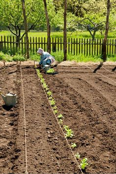 Planting a straight row in the garden (1) From: Loyd Heath this is exactly how we do it