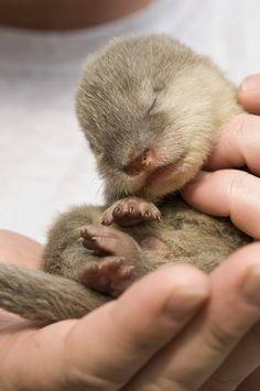 How sweeeeeeet!!!!! Baby Otter