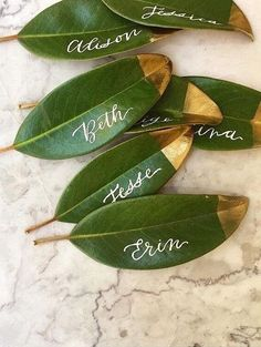 Bunch of 25 Fresh Magnolia Leaves to be used as Place Cards .- Bunch of 25 Fresh Magnolia Leaves to be used as Place Cards / Escort Cards / Real Leaf Wreath / Garland / Floral arrangements and bouquets - Trendy Wedding, Dream Wedding, Wedding Gifts, Diy Wedding Place Cards, Wedding Table Cards, Wedding Name Tags, Wedding Place Settings, Wedding Place Names, Spring Wedding