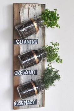 live herbs in small glass jars, angle mounted on the wall
