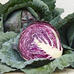 Heirloom Organic Red Cabbage Seeds - 50 Seeds - 2019 Harvest - Vegetable Gardening Grow Your Own Foo Types Of Cabbage, Cabbage Seeds, Raw Cabbage, Organic Seeds, Grow Organic, Growing Cabbage, Purple Vegetables, Garden Seeds, Gardens