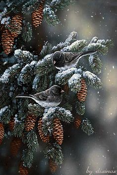 Wildlife art prints plus original paintings with a wide selection from ArtBarbar… – Famous Last Words Illustration Noel, Illustrations, Winter Scenery, Christmas Scenes, Bird Pictures, Watercolor Bird, Wildlife Art, Bird Prints, Bird Art