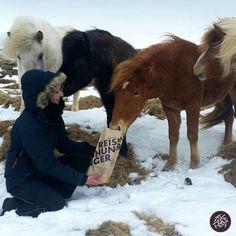 Reishunger Tüte im kalten Island #reishunger #reisen #reisneid #pony #pferdestärke
