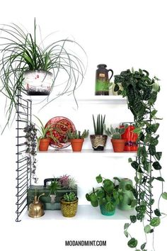 hanging plants indoor There are a few stubborn plant myths. They can make caring for indoor plants unnecessarily hard. Let's get the facts straight, and demystify the myths. Hanging Plants Outdoor, Patio Plants, Hanging Planters, Indoor Plants, Diy Hanging, Indoor Garden, Country Bedroom Design, Bedroom Plants, Interior Plants