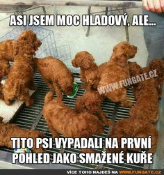 I confess, at first look, I thought it was KFC. How did they get those puppies to stay in that position? Dog Memes, Dankest Memes, Funny Memes, Funny Animal Pictures, Funny Animals, Cute Animals, Animal Pics, Funny Photos, Kfc
