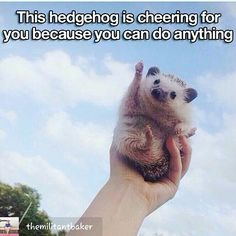 """You can do it! The hedgehog says so ☺ Also, I'm feeling a very strong theme right now of offering, needing, and asking for support... Why is it easier to smile and accept support from a picture of a (albeit adorable) hedgehog than it is to call a friend and say, """"help, please..."""" #meganrothhealing #souliseverything #selflove #selfacceptance #support #askforhelp #illbethere #wellbeing #yoursouliswhatmatters #lovelife #youmatter #yourbestlife"""
