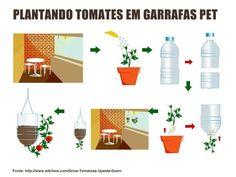 Como plantar tomate en garrafas colgantes