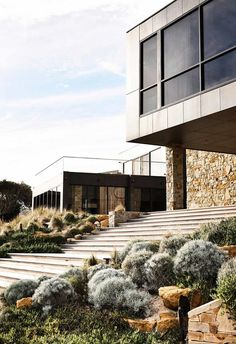 Elegant and sophisticated, silvery-tinged plants and shrubs create a considered scheme in your garden. Here are 18 of the best. Australian Garden Design, Australian Native Garden, Australian Homes, Architects Melbourne, Low Maintenance Backyard, Silver Plant, Flora, Coastal Gardens, Victorian Terrace