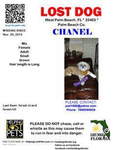 Lost Dog - Mix - West Palm Beach, FL, United States
