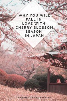 Wanderlust Travel, Asia Travel, Japan Travel, Travel Tips, Cherry Blossom Japan, Cherry Blossom Season, Cherry Blossoms, The Beautiful Country, Beautiful Things
