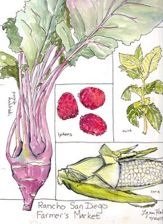 Sketchbook Skool: assignment was to draw fruits and veggies arranged on a grid. Pen and ink and watercolor.