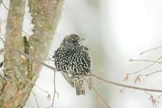 Arctic Visitors, Daylight Owls and the Birds of Winter Seattle, WA #Kids #Events