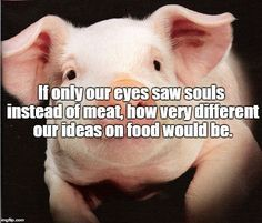 Vegan Truth... Food for thought! Vegan perspective. Look through the lens of love.