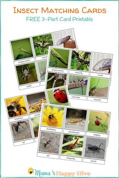 Free Insect Matching Card Printable for Toddlers and Preschoolers This free insect matching card printable is used to help your child become familiar with new vocabulary and develop visual discrimination. Preschool Bug Theme, Preschool Printables, Kindergarten Activities, Toddler Preschool, Preschool Activities, Montessori Toddler, Educational Activities, Insect Crafts, Bug Crafts