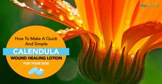 Does Your Dog Have a Wound? Consider This Calendula Lotion Recipe - Dogs Naturally Magazine Natural Home Remedies, Herbal Remedies, Wounded Healer, Lotion Recipe, Wound Healing, Calendula, Natural Herbs, Pet Health, Dog Food Recipes