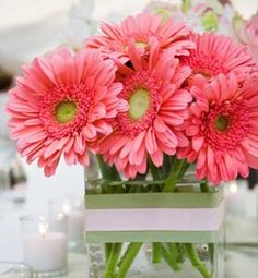 Gerbera daisies with green/white stripe ribbon - would be great on your Strawberry Shortcake dessert table