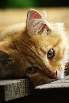 #looking #tired #catskittens