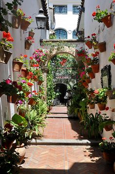 Patio Festival, Córdoba, Spain. I can imagine walking back from the open air market carrying fresh fish, flowers, wine and fresh baked bread.