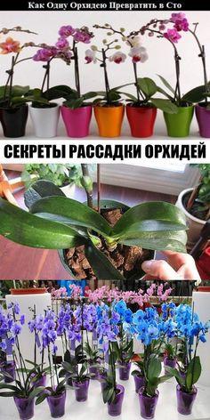Секреты рассадки орхидей: как превратить одно растение в 100. Blue Roses, Florida, Houseplants, Wedding Bouquets, Diy And Crafts, Home And Garden, Flowers, Image, Books