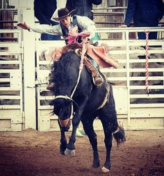Clancy Glenn Saddle Bronc riding! Cowboy up